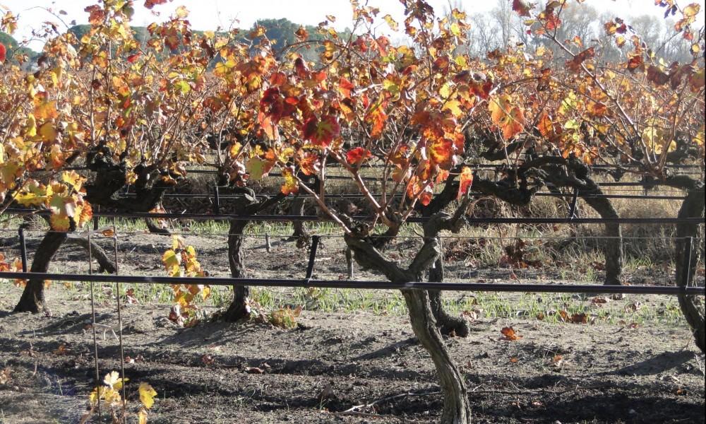 Irriguer la vigne avec des eaux usées traitées c'est possible !