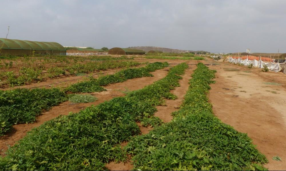 Réutilisation des eaux usées dans la région du MENA (Afrique du Nord et Moyen Orient)