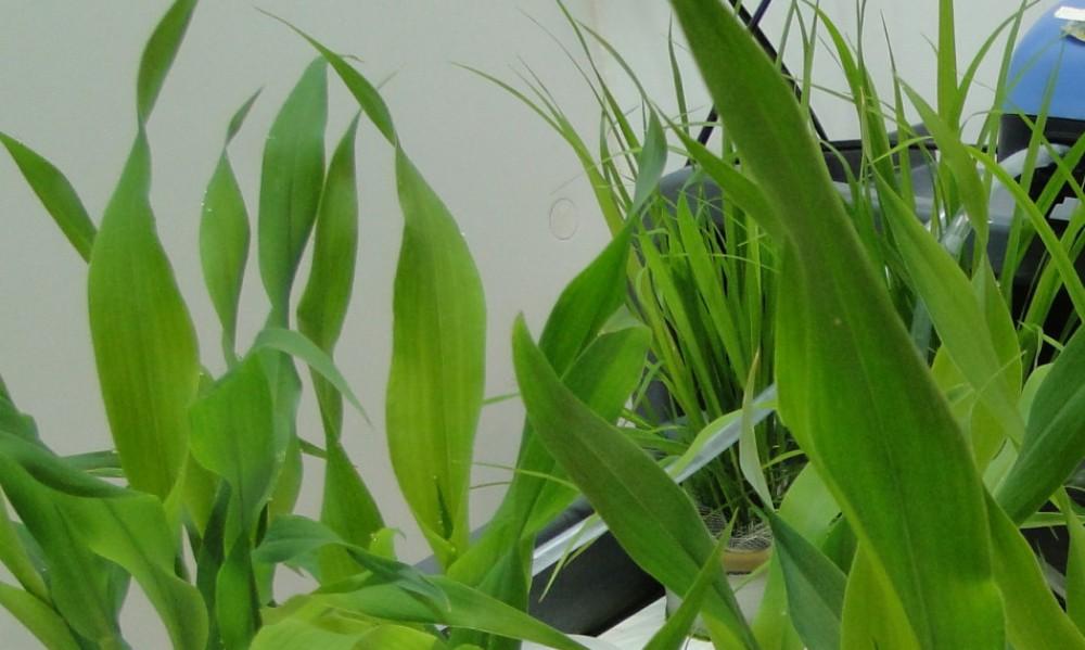 Soil&Crop lab